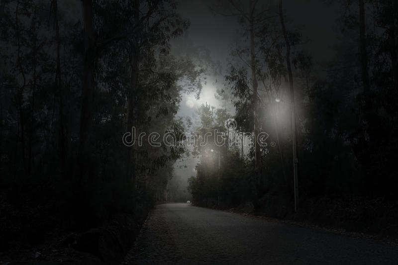 Forest road in a full moon night royalty free stock photography