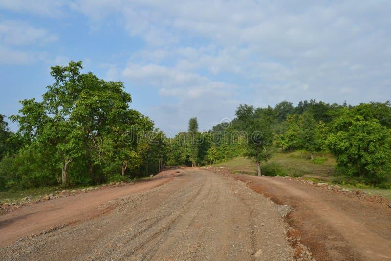 Forest Road, gröna träd, himmel och moln i Indien royaltyfri bild