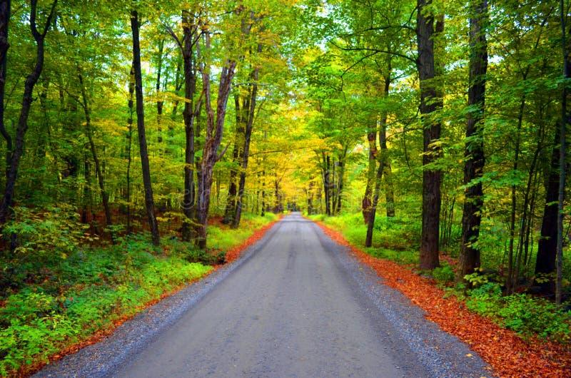Forest Road i nedgång royaltyfri foto