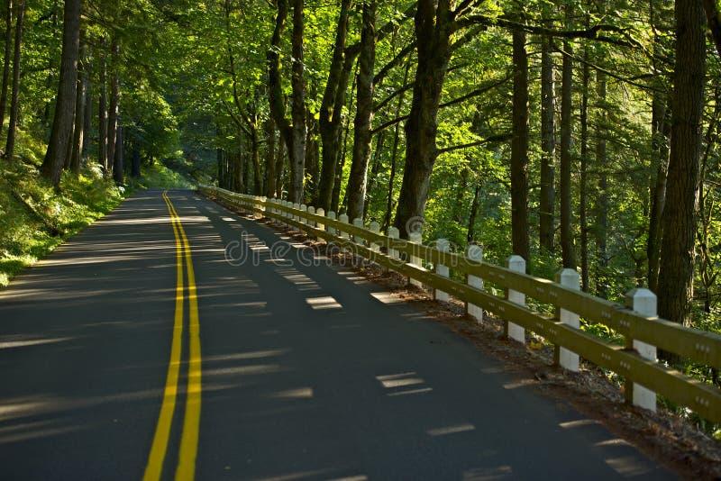 Forest Road i Oregon fotografering för bildbyråer