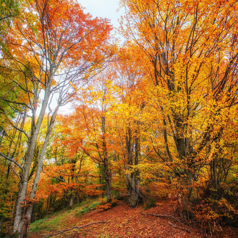 Forest Road im Herbst lizenzfreie stockfotos