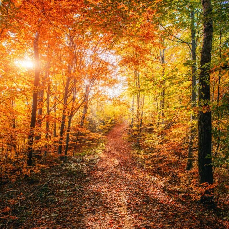 Forest Road im Herbst landschaft lizenzfreies stockbild