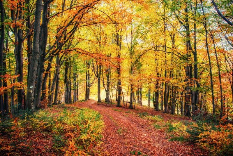 Forest Road im Herbst landschaft ukraine europa stockbilder