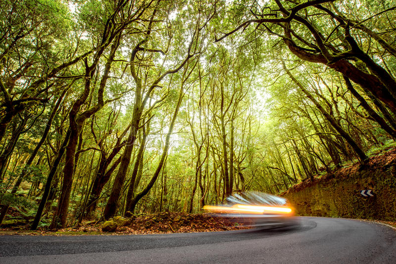 Forest road on La Gomera island. Asphalt road in evergreen forest with blurred car in Garajonay national park on La Gomera island stock images