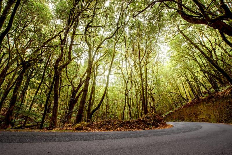 Forest road on La Gomera island royalty free stock image