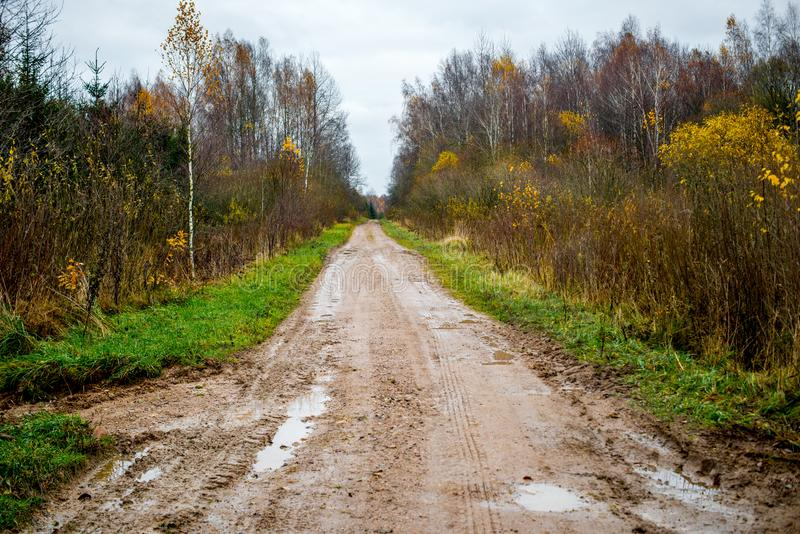 Forest road in late fall. Forest road path in late fall with bare trees royalty free stock image