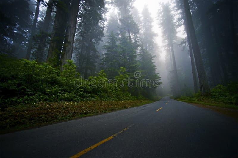 Forest Road místico fotos de stock royalty free