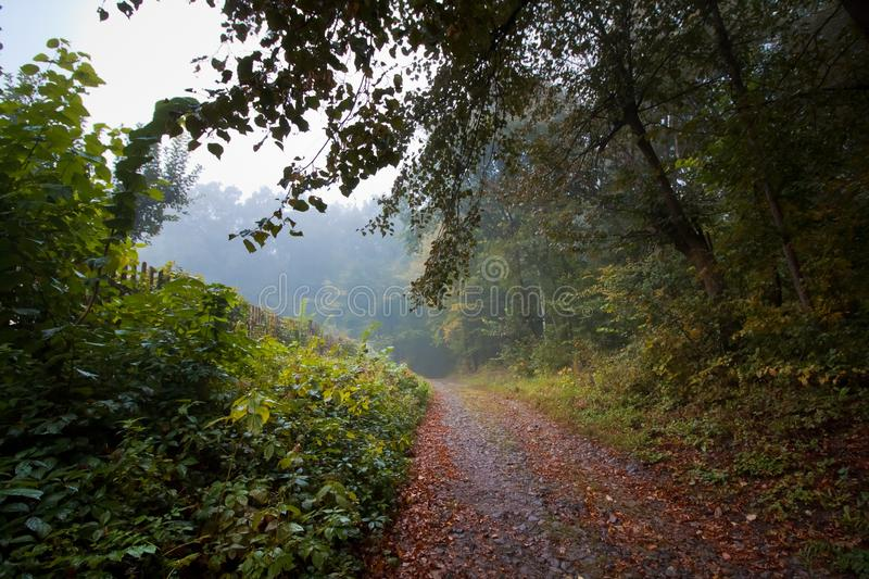 Forest road on a misty autumn morning, typical foggy October weather, yellow, orange and red wet fallen leaves royalty free stock photo