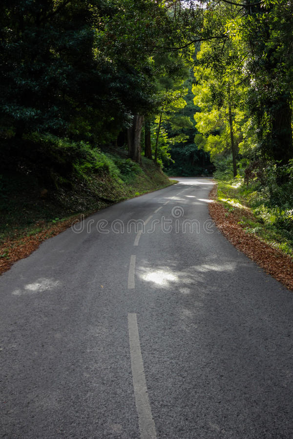 Forest Road Panorama immagini stock
