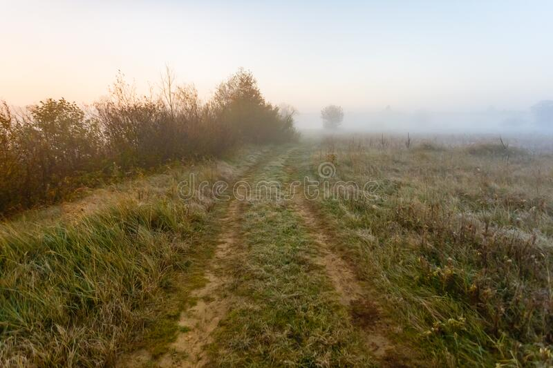 Forest road on a picturesque foggy field. Road for poachers and fishermen across the border. Forest road on a picturesque foggy field. Road for poachers and royalty free stock photo
