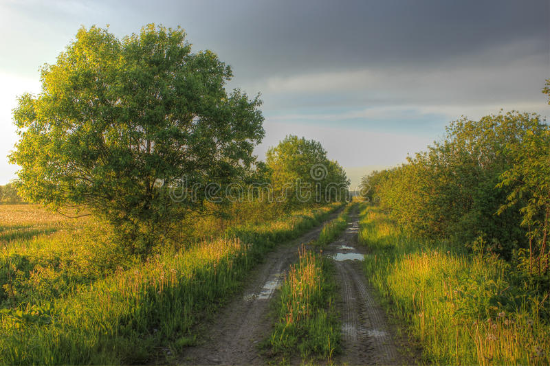 Forest road, Russia stock photography