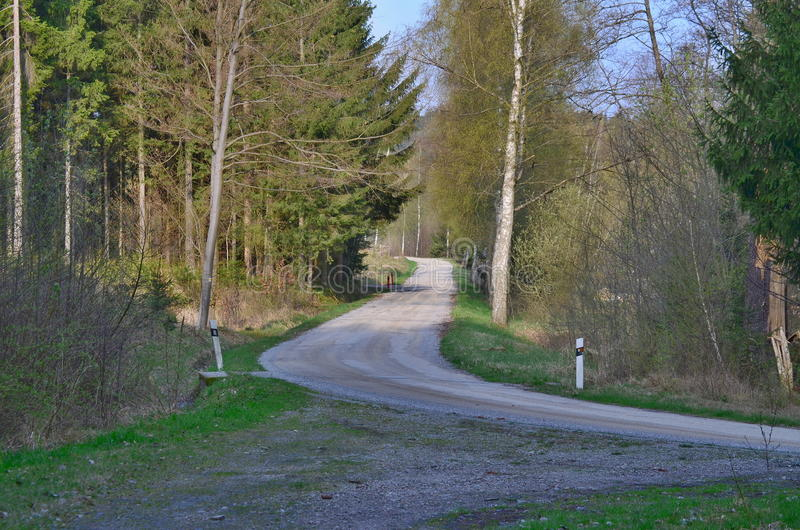 Download Forest road stock photo. Image of road, trail, scenery - 91119958