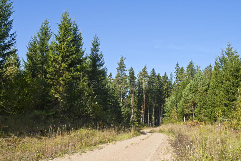 Forest Road in the summer royalty free stock photos