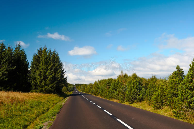 Forest road to nowhere stock image