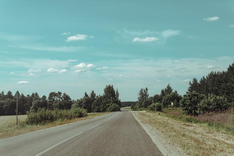 Forest road to nowhere with pine trees on the sidelines royalty free stock photos