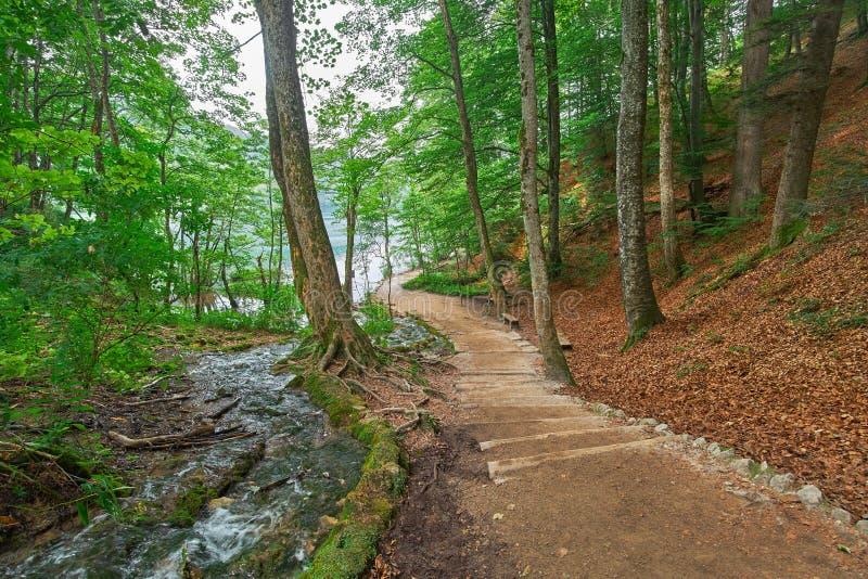 Forest Road Trail i Plitvice, Kroatien fotografering för bildbyråer