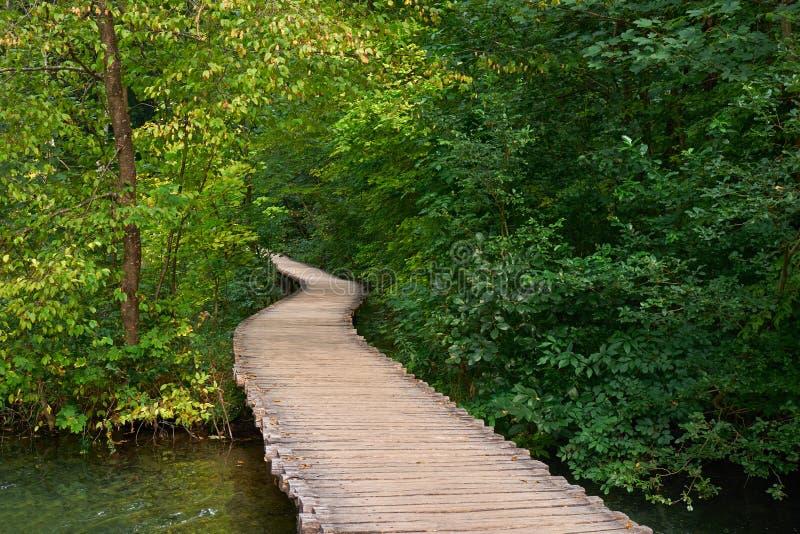 Forest Road Trail in Plitvice, Kroatië stock afbeeldingen