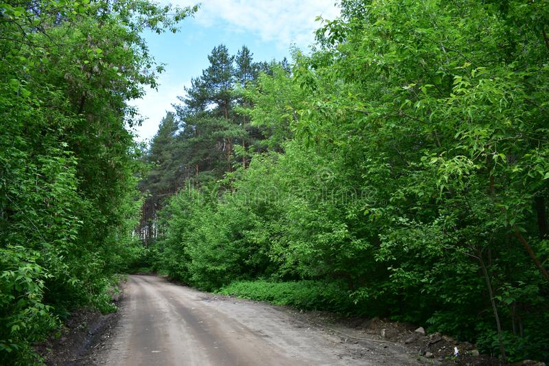 On the forest road tree branches prevent drivers from noticing road signs. Intertwined tree branches, amazing forest with one common crown stock image