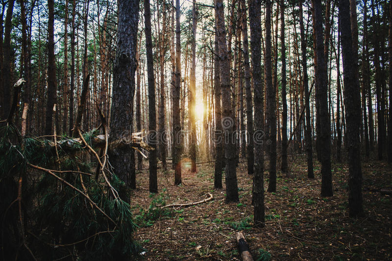 Download Forest Road Under Sunset Sunbeams Stock Photo - Image: 83721766
