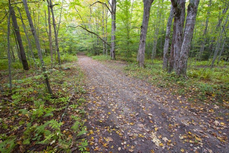 Forest Road in Vermont, USA mit gefallenen Blättern lizenzfreie stockfotos