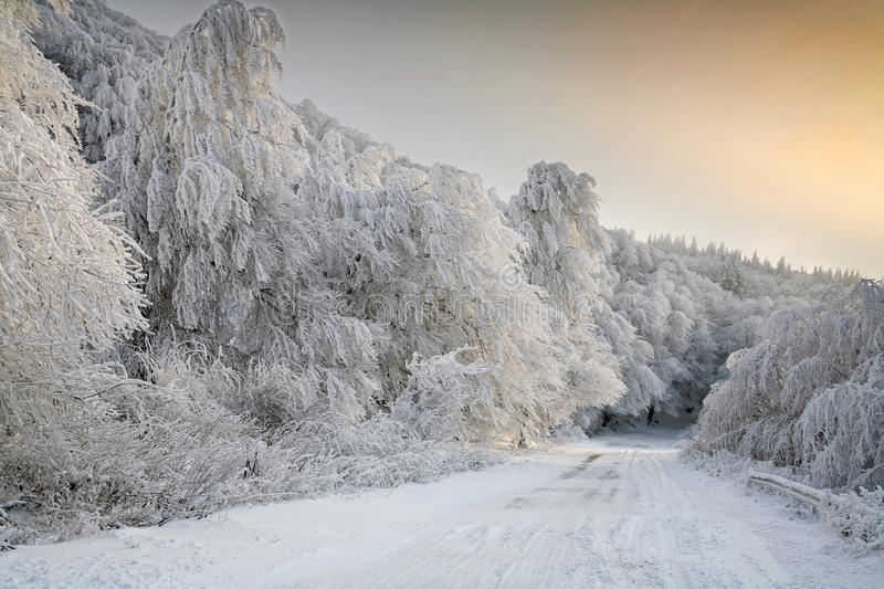 Download Forest road in winter stock photo. Image of sunrise, cold - 22964674