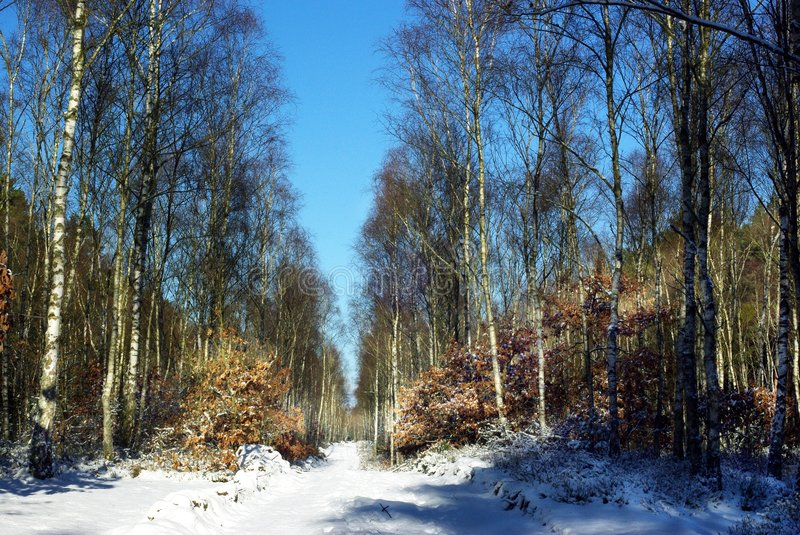 Forest road winter. Forest road in winter scenery royalty free stock images