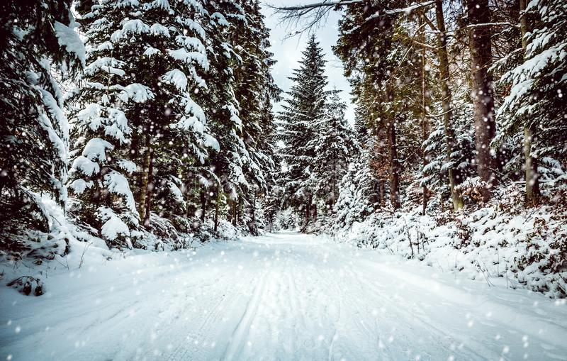 Forest road in winter stock photography