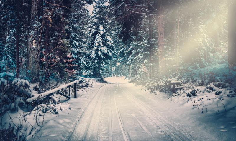Forest road in winter stock images