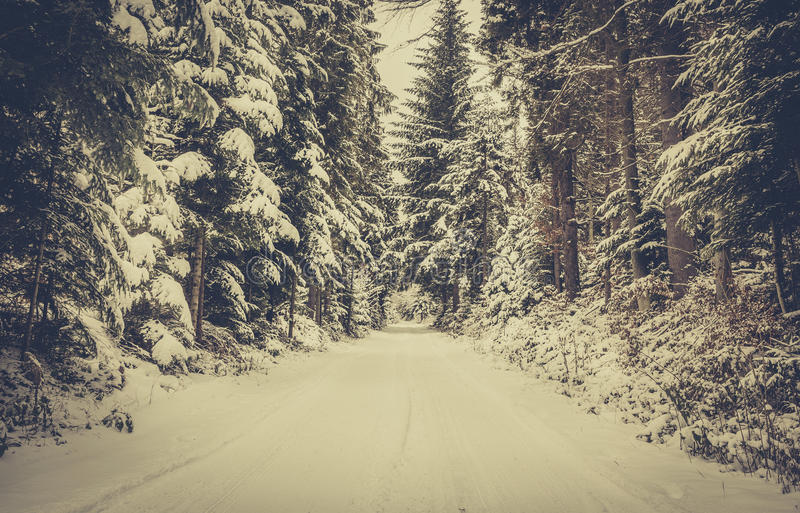 Forest road in winter royalty free stock photos