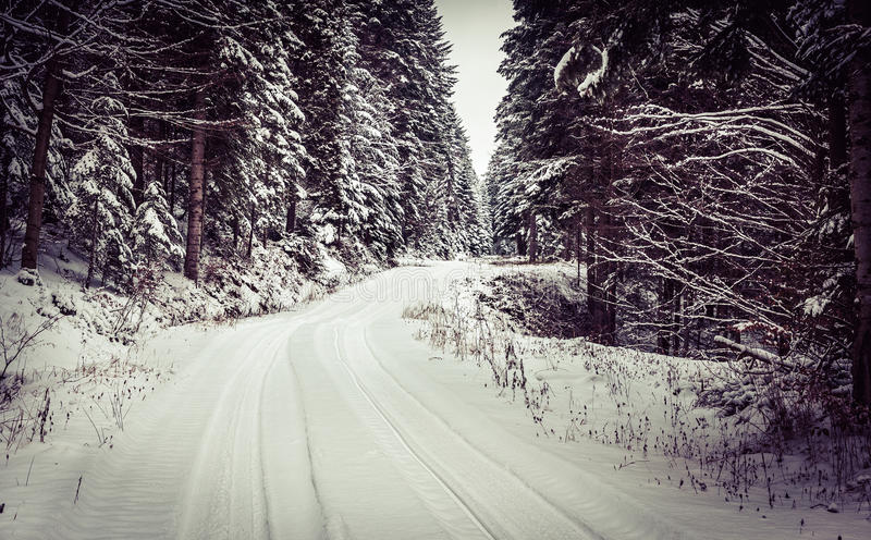 Forest road in winter royalty free stock image