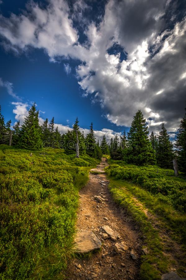 Free Forest Rocky Path From Obri Skaly To The Peak Of Serak With Green Pine Trees And Scenic Blue Sky In Jeseniky Royalty Free Stock Photos - 129345898