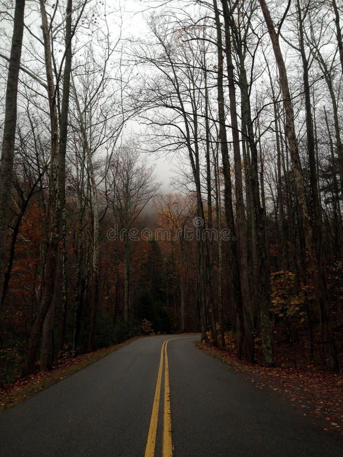 Forest Rode solitario con Autumn Trees imagen de archivo