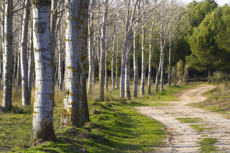 Download Forest with rural way stock image. Image of sunbeam, soft - 13859039