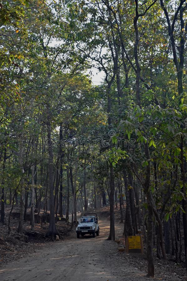 Forest Safari National Park, India. A typical jeep which is used when going to a safari in india. Above the jeep you can see a hawk. the photo is taken in royalty free stock photos