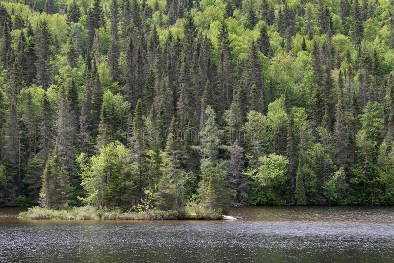 Forest of Saguenay Region of Quebec Canada. Mixed forest along the water of Baie Eternite in Fjord National Park in the Saguenay region of Quebec Canada on a royalty free stock images