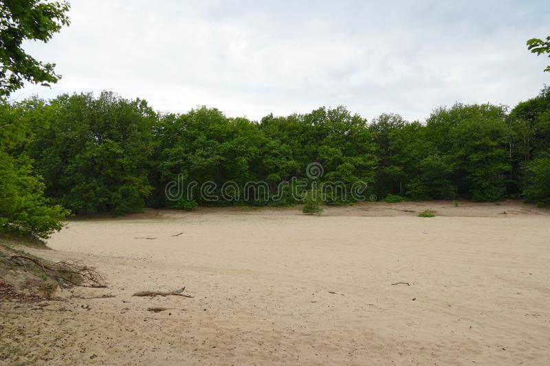 Forest and sand dunes in the Netherlands. Vrachelse Heide nature area near Oosterhout in the Netherlands royalty free stock photography