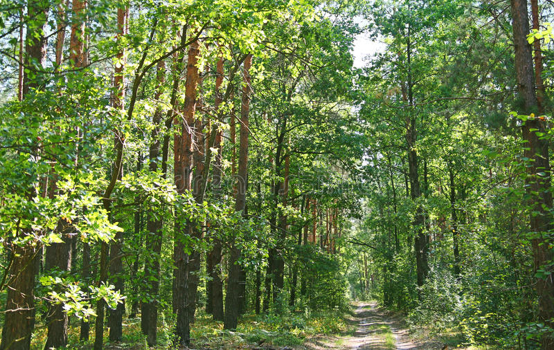 Download Forest Road On A Summer Day Stock Photo - Image: 29876084