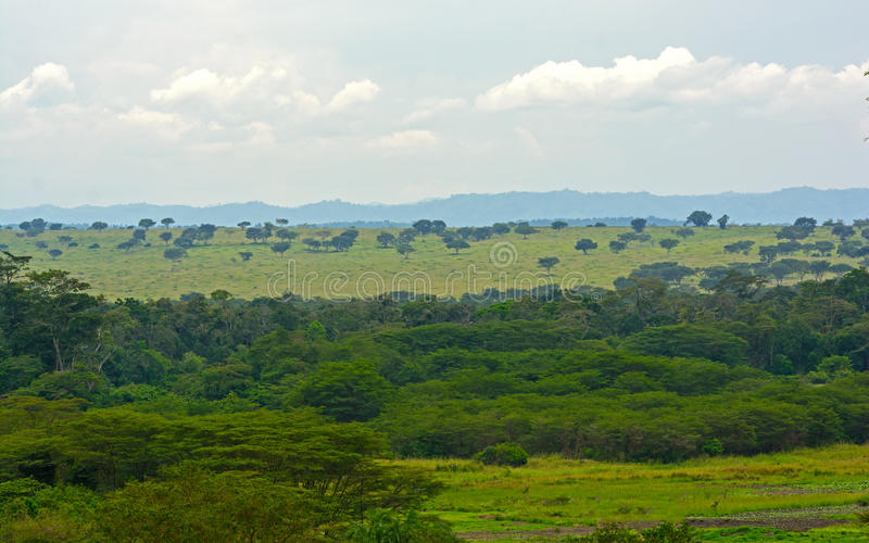 Forest and Savanna in Africa. In the Ishasha Region of Queen Elizabeth National Park royalty free stock photos