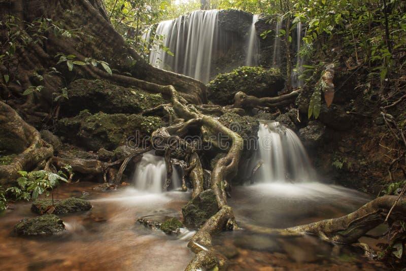 Forest Scape lizenzfreie stockfotografie