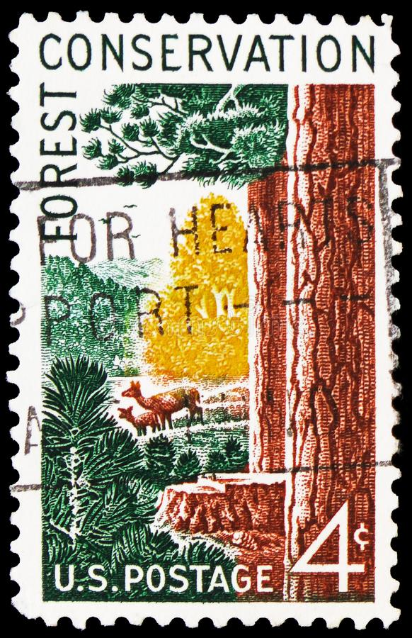Forest Scene, Forest Conservation Issue serie, circa 1958. MOSCOW, RUSSIA - FEBRUARY 20, 2019: A stamp printed in USA shows Forest Scene, Forest Conservation stock photos