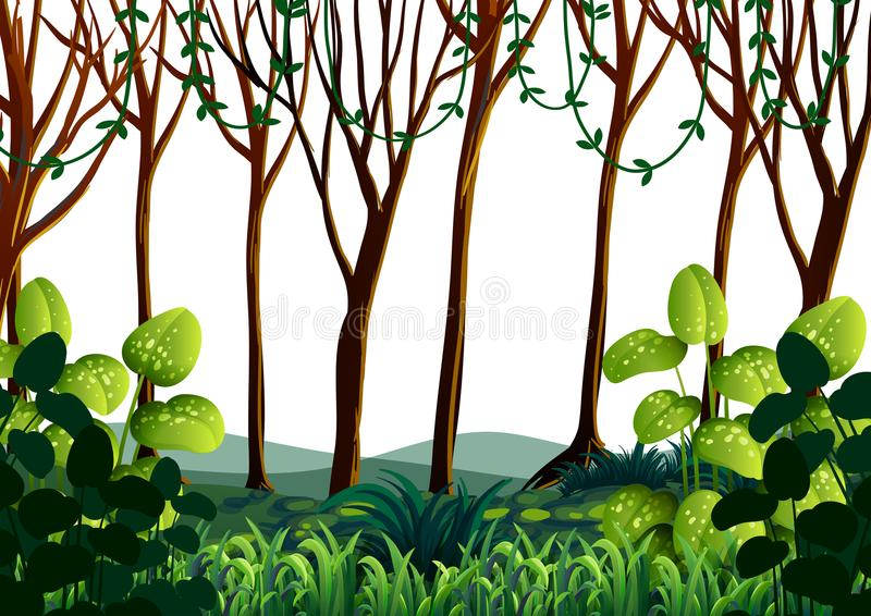 Forest scene with green trees royalty free illustration