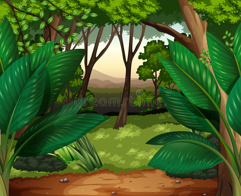 Forest scene with lots of trees stock illustration