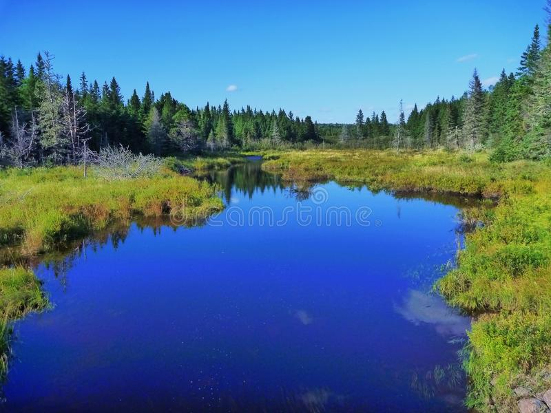 Forest Scene in Northern New Brunswick. A small brook within Mount Carleton Provincial Park in New Brunswick, Canada stock photography