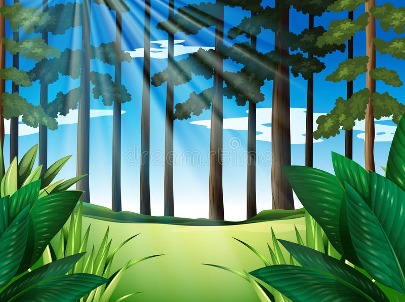 Forest scene with trees at daytime stock illustration
