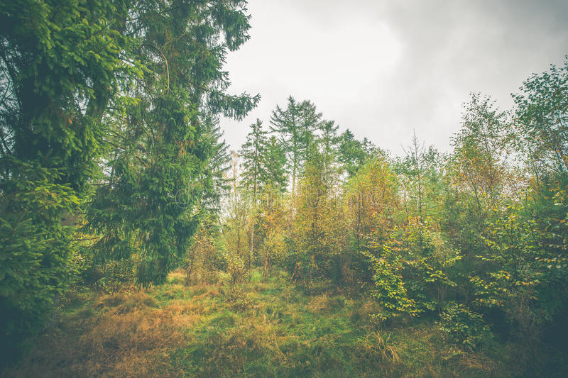 Forest scenery with colorful trees. In the fall stock photography