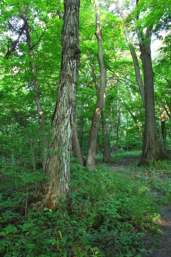Forest Scenery in Shabbona-Park stockfoto