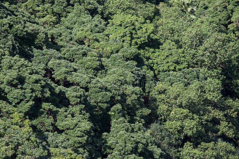 Forest seamless pattern, view from above. royalty free stock photo