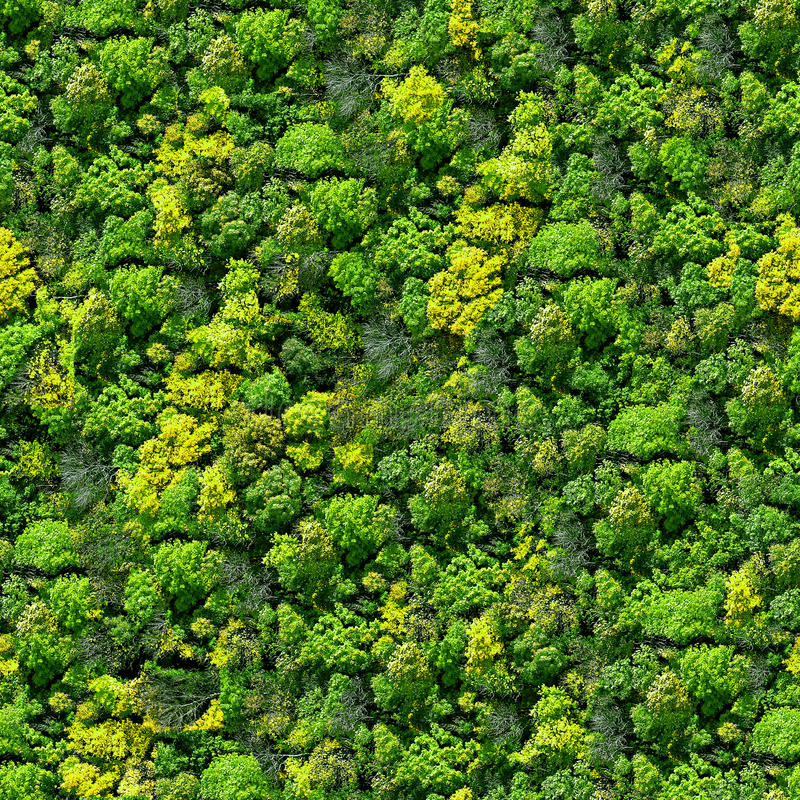 Free Forest Seamless Pattern - View From Above. Stock Photo - 13830390