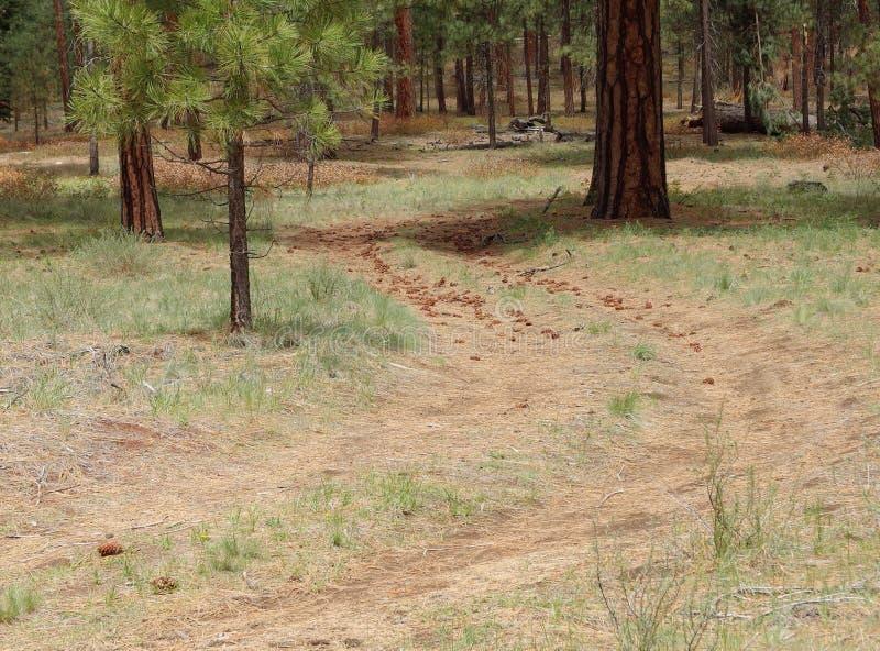 Forest Service-Straße durch das Holz stockfotografie