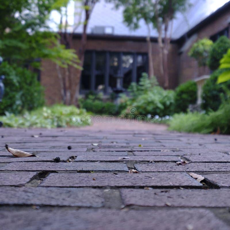Forest Setting, soporte de las sombras de los ?rboles y Forest Floor imagen de archivo